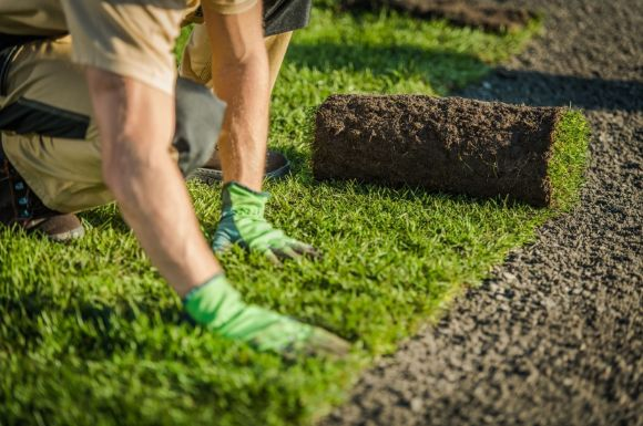 a person laying down grass in a garden by Bendigo Landscapers